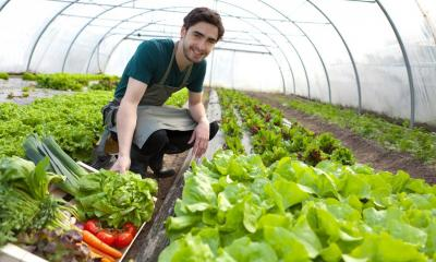 Young man attending his vegetables on his smallholding